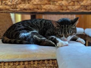 Domek Trzy Koty Three Cats House