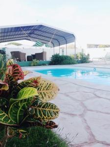Jade's Oasis, Alloggi in famiglia - Oranjestad