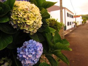 Casa LeM, Lajes das Flores