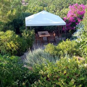 Aegina's Oasis Aegina Greece
