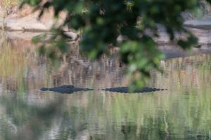 Rukiya Safari Camp (3 of 72)