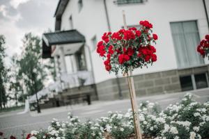 Różany Zakątek