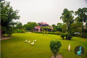 THE PEPFARM-Farmhouse with pool for parties, Holiday homes  Gurgaon - big - 7