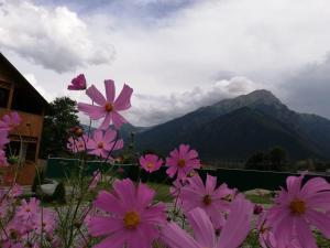 Guest House Mountain wind - Hotel - Arkhyz