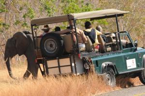 Ngoma Safari Lodge (39 of 44)