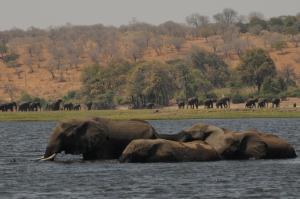 Ngoma Safari Lodge (31 of 44)