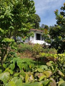 Peaceful Garden House for lovers photos