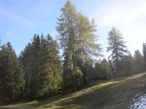 Berghaus Schifer, Inns  Klosters Serneus - big - 40