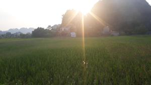 Center Tam Coc Homestay