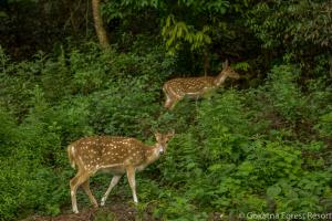 Gokarna Forest Resort (15 of 116)