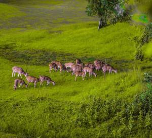 Gokarna Forest Resort (3 of 116)