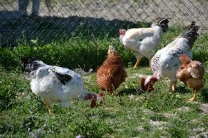 Agriturismo Antico Muro, Farm stays  Sassoferrato - big - 20