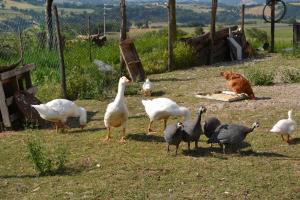 Agriturismo Antico Muro, Farm stays  Sassoferrato - big - 7