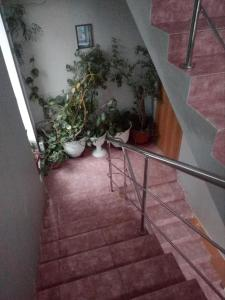 Отель Анис, Видное