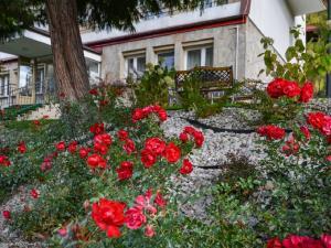 Dom Wczasowy Sokolica