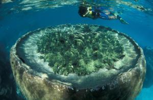 Sal Salis Ningaloo Reef (9 of 38)