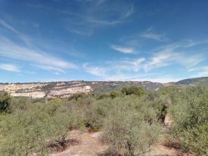 Residence degli ulivi