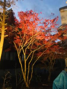 Onsen Guest House Yasumori - Hotel - Hachimantai