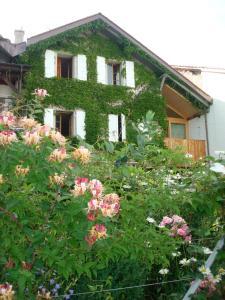 Wonderlandscape Guest House - Hotel - Geneva
