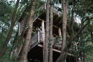 Orion Tree Houses (1 of 35)
