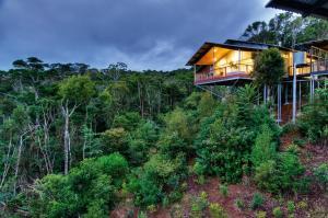 O'Reilly's Rainforest Retreat (40 of 65)