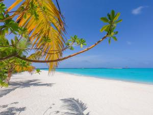 The Standard, Huruvalhi Maldives (14 of 63)