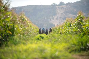 La Casona at Matetic Vineyards (25 of 48)
