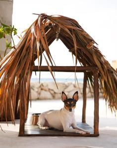 Viceroy Riviera Maya (35 of 65)