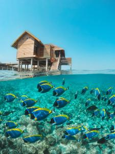 Vakkaru Maldives (16 of 49)