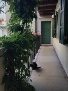 Villa Monica - Accommodation - Brentonico