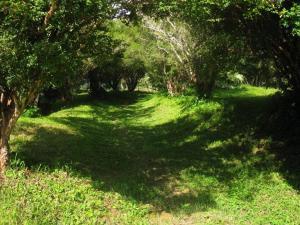 Fazenda Caturama, Дома для отпуска  Areal - big - 35