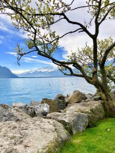 Montreux Lake View - Apartment - Montreux