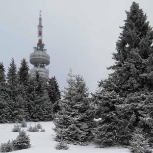 Snowy Dreams Pamporovo Apartments - Pamporovo