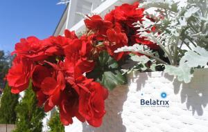 Belatrix nad Bałtykiem