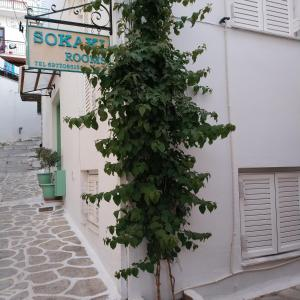 Sokaki rooms