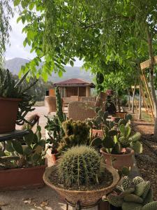 obrázek - Yucca House Gökova