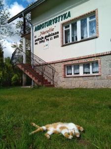 Agroturystyka Natalia