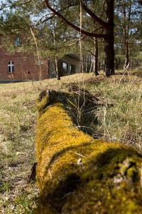 Dom w lesie Skromny las