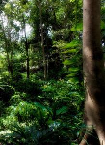 The Andaman Resort Langkawi (3 of 106)