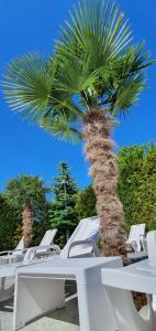 Pod Winogronem Palmy 2 baseny Śniadania