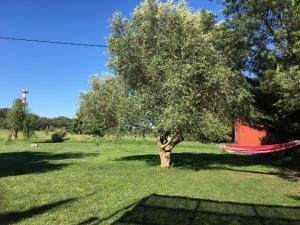 Gite L olivier