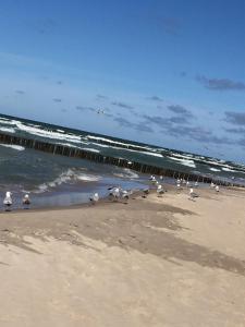 Domki ALEX przy plaży