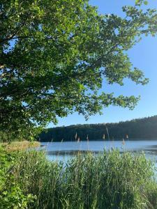 MIĘDZY NAMI domki nad jeziorem