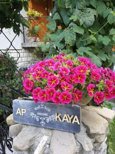 Apartment KAYA