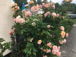 Willa Róż