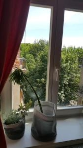 Great and unique big 4 room apartment in Krakow view on Planty and Mariacki Church