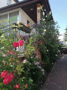 Gościniec pod Różą