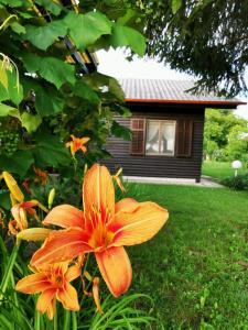 ---TURISTIČNI BONI---Merikotka - cozy wooden cottage near Celje