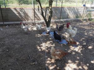 Eleonas Farm House Achaia Greece