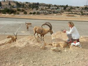 Aloni Neve Zohar Dead Sea, Апартаменты  Неве-Зоар - big - 57